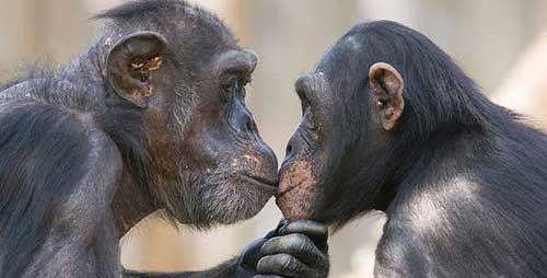 قاعدگی در حیوانات/ آیا حیوانات ماده هم پریود می شوند؟!