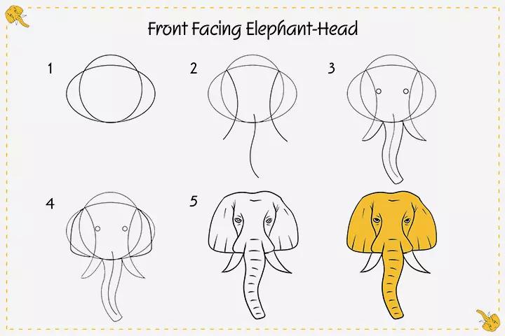 فیل با صورتی از روبه رو