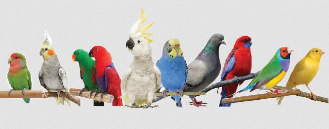 برخی از حقایق جالب و سرگرم کننده در مورد پرندگان