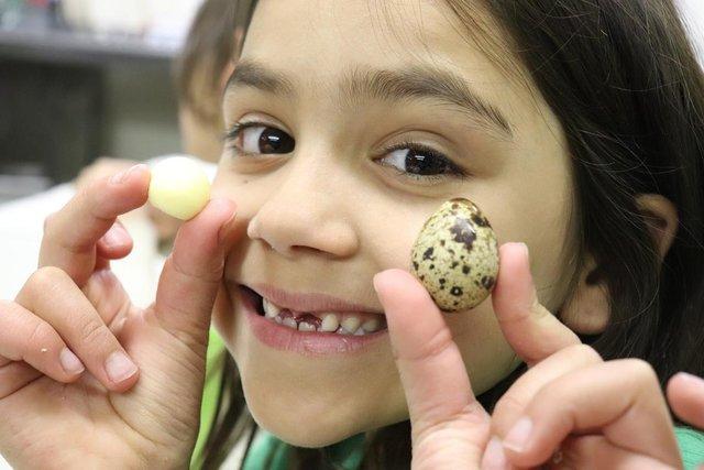 11 مزیت تخم بلدرچین برای کودکان