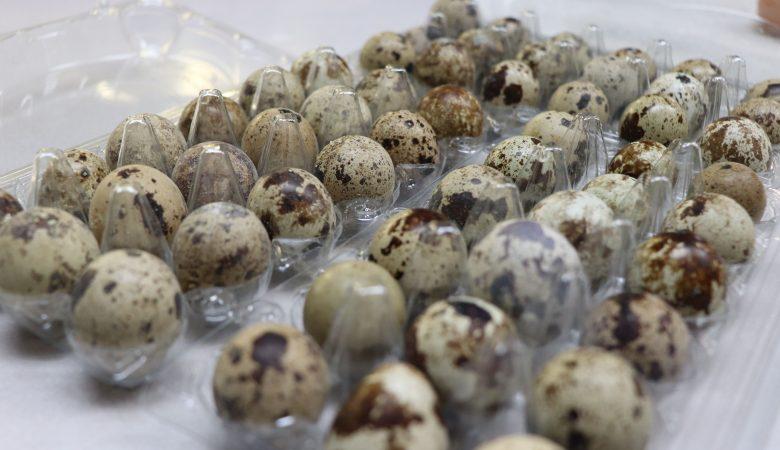 11 مزیت تخم بلدرچین برای کودکان؛ 4 دستورالعمل تهیه و پخت + عوارض جانبی مصرف زیاد آن