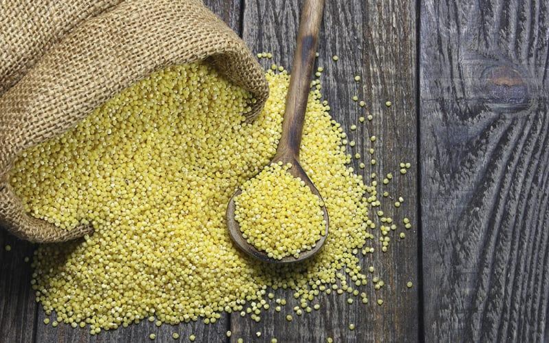 فواید ارزن (گندمیان) برای بهبود سیستم ایمنی و رفع گرسنگی