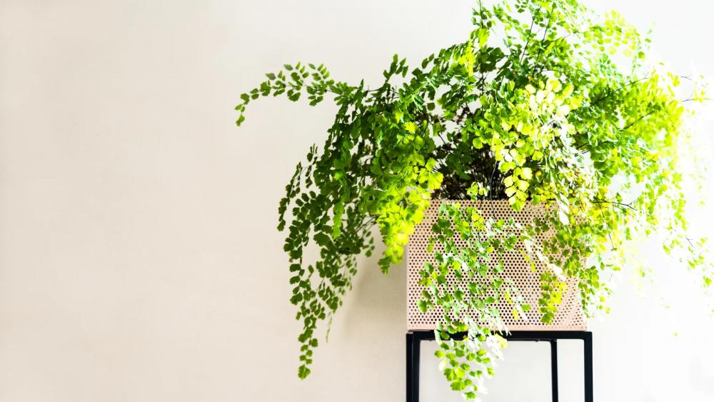 31 گیاه آپارتمانی با نیاز به نور کم و نحوه نگهداری از آنها در خانه