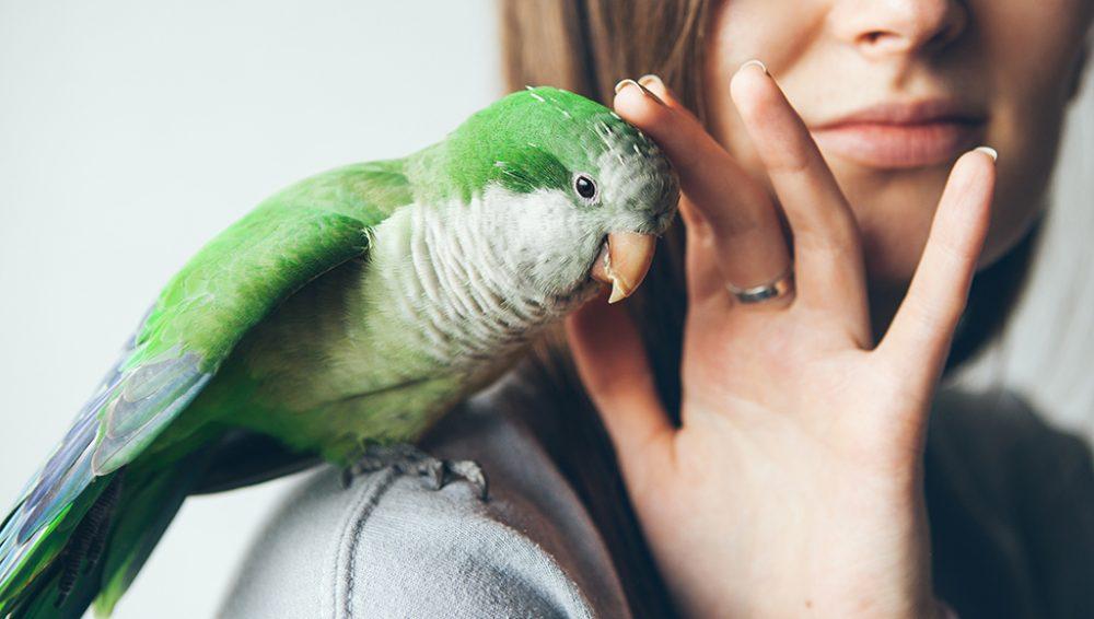 عوارض نگهداری پرنده در دوران بارداری