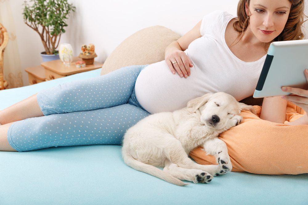 خطرات حیوان خانگی در بارداری