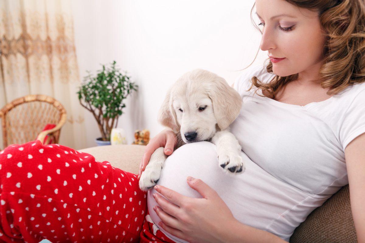 سگ در خطرات حیوان خانگی در بارداری